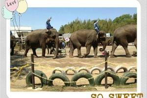 3歳まで完全無料の遊び場&テーマパーク2013