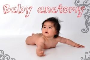 静岡県10月19日★赤ちゃんの身体から学ぶ解剖学