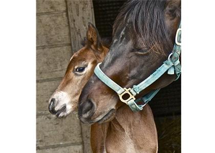 午年だからとことん推します『馬』画像だよ、全員集合!!_4