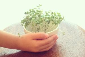 栄養満点『スプラウト』! 室内でできるプチ家庭菜園