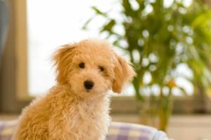 ペットは家族の一員!妊娠・産後もペットと暮らすためのポイント