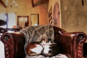 空前の猫ブーム!子どもがいる家庭で猫を飼うときの注意点