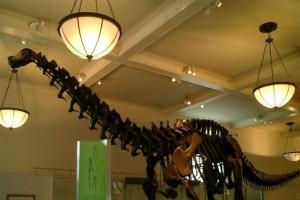 今年のトレンドは『恐竜』!子どもと出かけたい恐竜レジャー4選