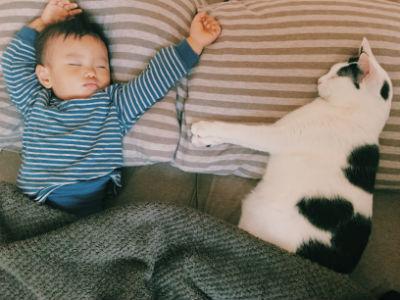 みんなの猫暮らし3