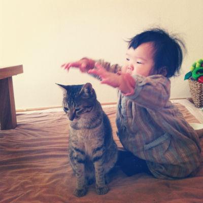 みんなの猫暮らし6