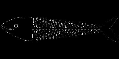 自由研究 魚の骨の観察
