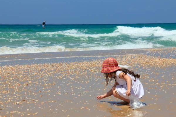 夏休みにおすすめ!子供の認知力・観察力を育む『磯遊び』
