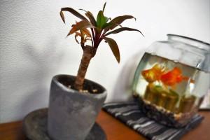 簡単!手間いらず♪ダイソーで購入できる観葉植物5選