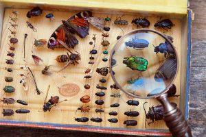 昆虫ブーム到来!?国立科学博物館の特別展『昆虫』に行ってみよう!