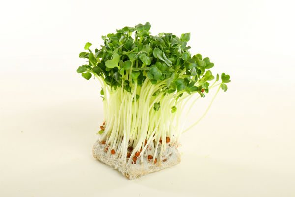 9月18日は『かいわれ大根』の日!実は栄養豊富なかいわれ大根をおいしく食べよう!