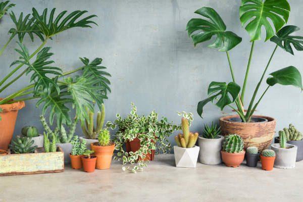 お部屋に置くだけ!ずぼらママでも育てられる観葉植物5選